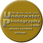 Perfect moment : winning a gold medal in UWP contest (1/3)