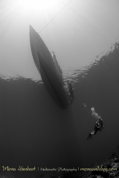 waiting for the shark