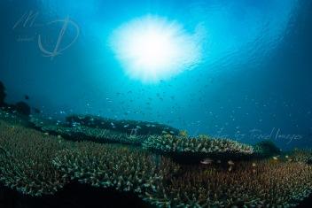 Sulawesi indonesia 2013