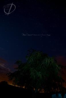 starry tree 2