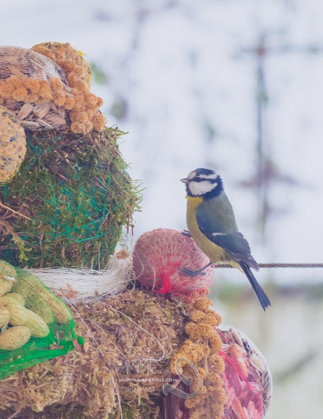 Birds' Winter Restaurant (3/6)
