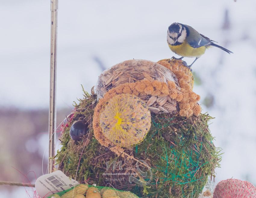 Birds' Winter Restaurant (4/6)