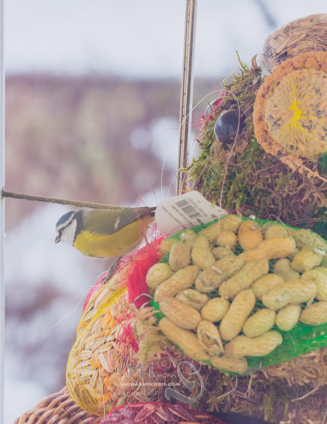 Birds' Winter Restaurant (5/6)