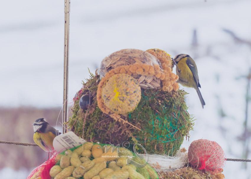 Birds' Winter Restaurant (2/6)