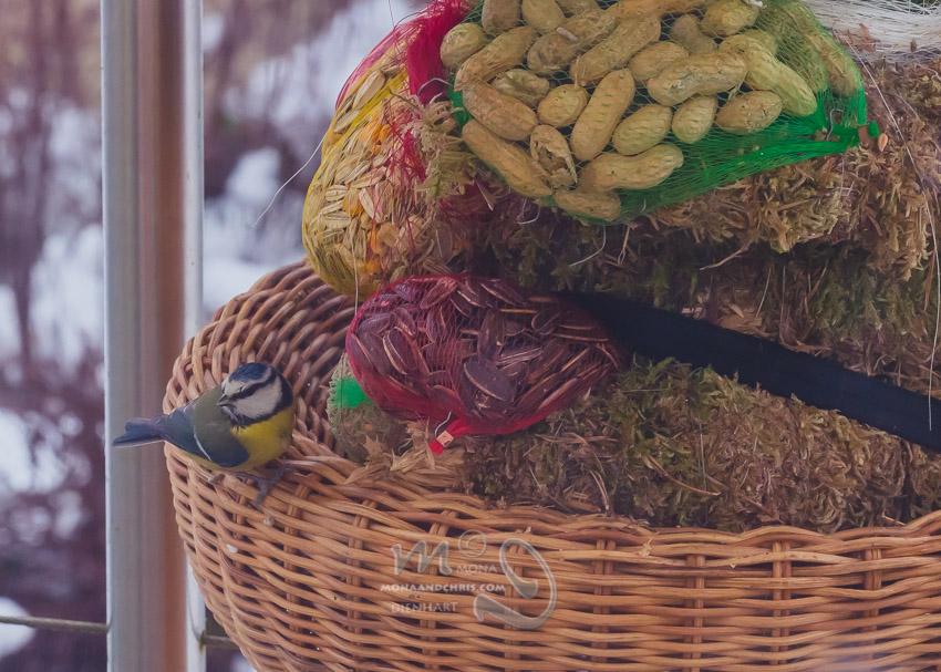 Birds' Winter Restaurant (6/6)