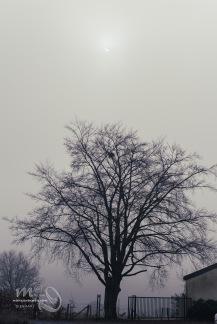 eclipse-8595