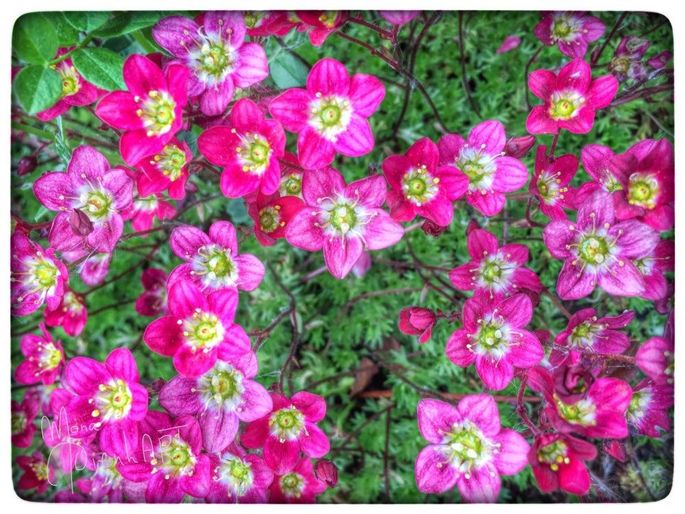 Spring blossoms (3/3)