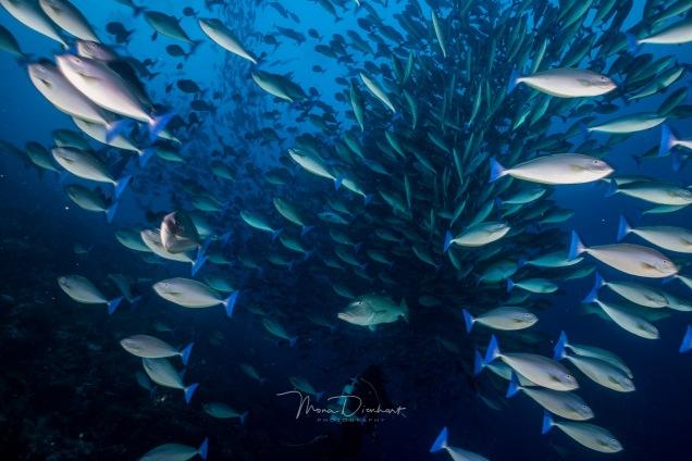fishbowl-0008