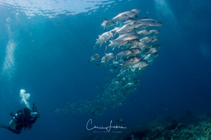 fishbowl-0009
