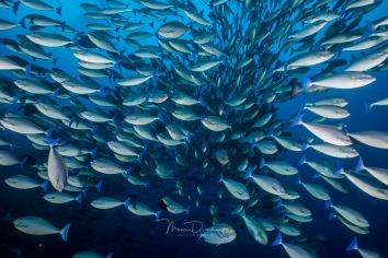fishbowl-0010