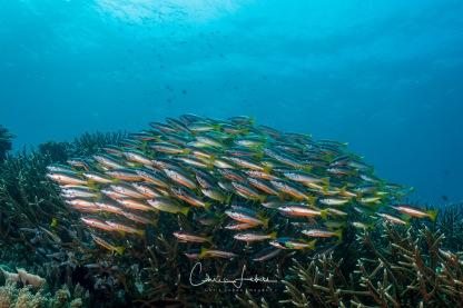 fishbowl-0011