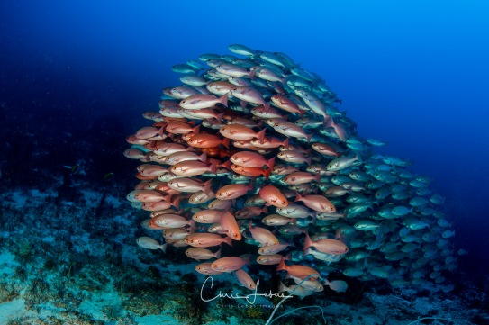 fishbowl-0014