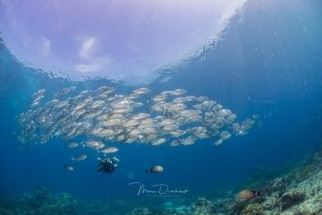fishbowl-0016