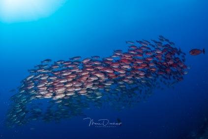fishbowl-0021