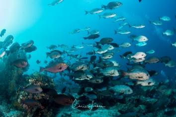 fishbowl-0022