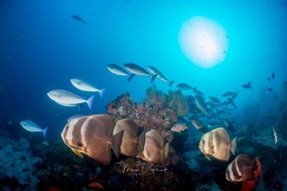 fishbowl-0024